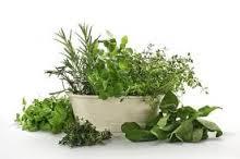 herbs to help candida