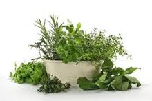 herbs to help candida