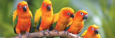 Umngeni River Bird Park
