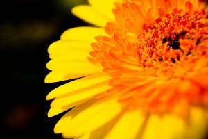 yellow_happiness_by_randomfragment-d53sj83
