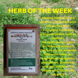 herb-of-the-week-stinging-nettle