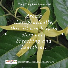 ylang-ylang-pure-essential-oil