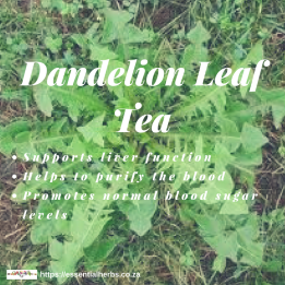 dandelion-leaf-physical